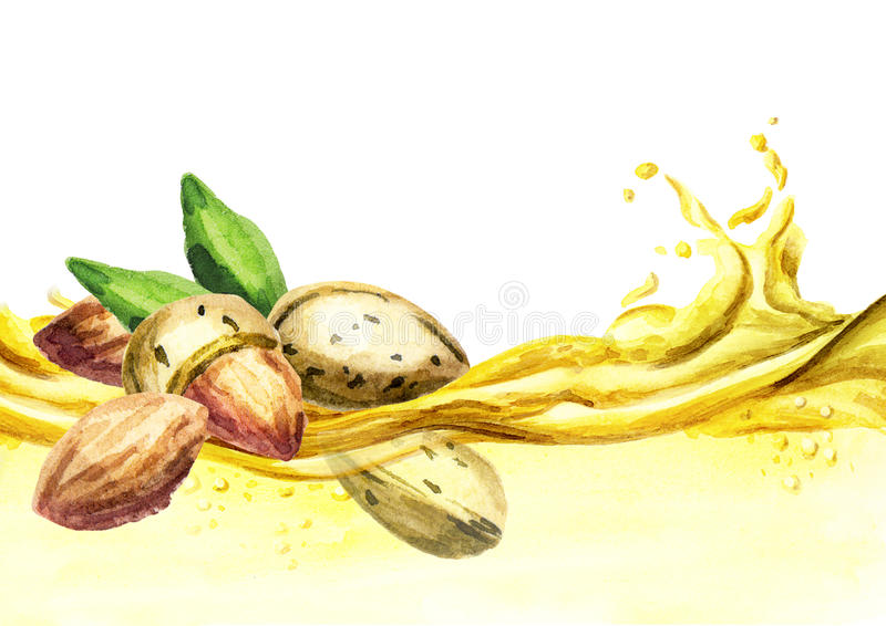 Onda del aceite de almendra, acuarela ilustración del vector