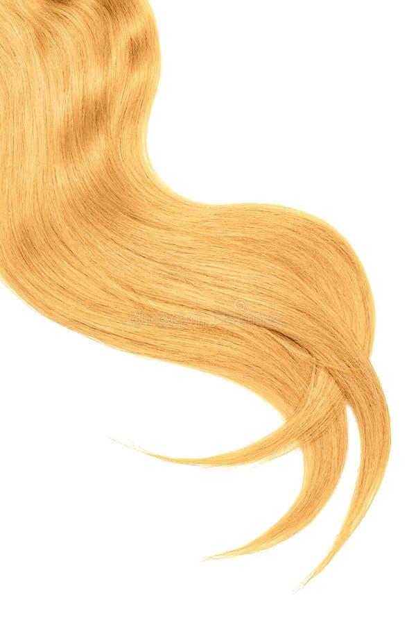 Onda do cabelo louro natural no fundo branco Rabo de cavalo ondulado fotografia de stock