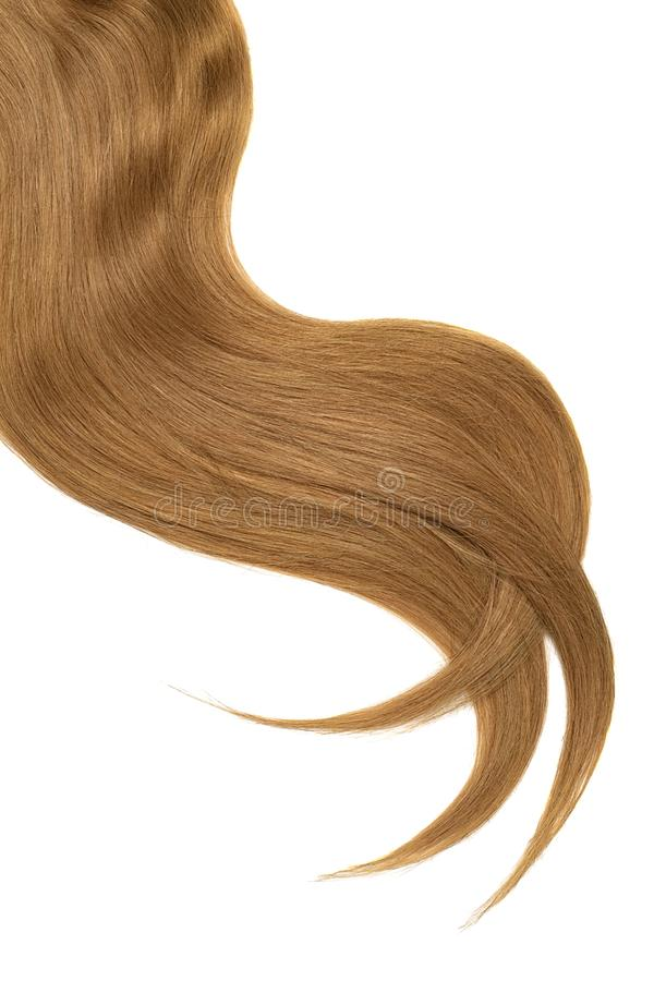 Onda do cabelo marrom natural no fundo branco Rabo de cavalo ondulado imagem de stock