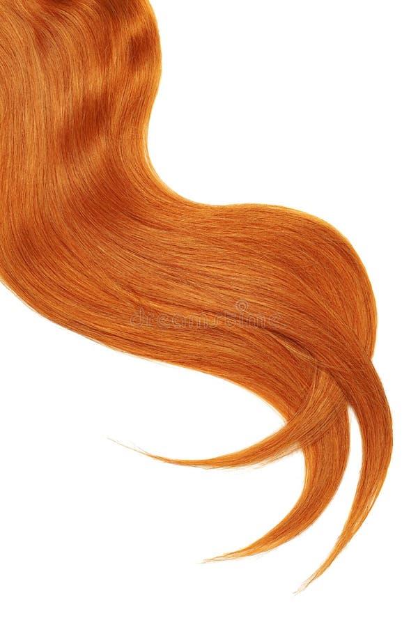Onda do cabelo vermelho natural no fundo branco Rabo de cavalo ondulado fotos de stock