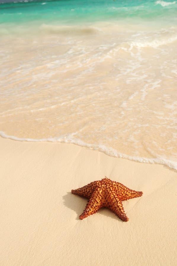 Onda dos Starfish e de oceano imagens de stock