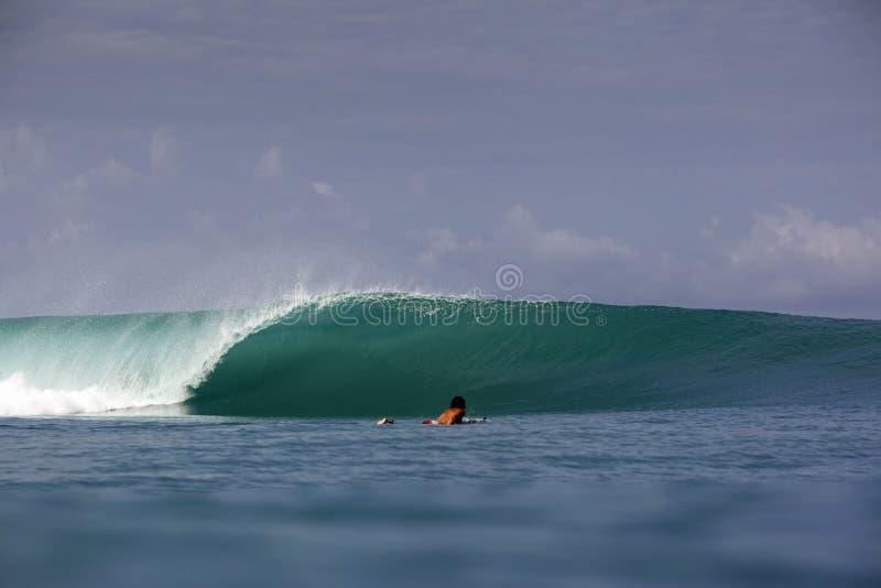 Onda e surfista praticanti il surfing tropicali verdi fotografia stock libera da diritti
