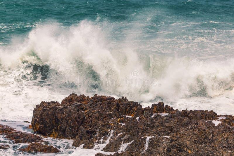 Onda enorme que deixa de funcionar o litoral rochoso em Hermanus, África do Sul fotos de stock royalty free