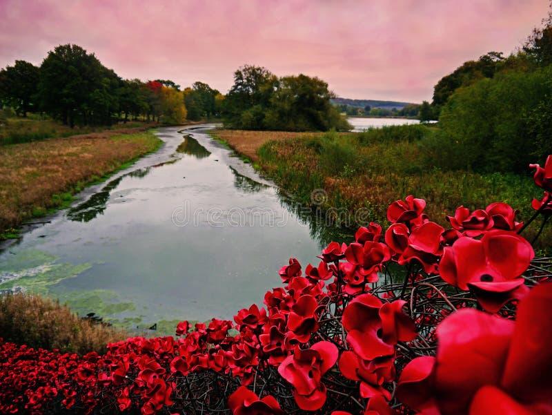 Onda icónica Poppy Art Installation en el parque de la escultura de Yorkshire fotografía de archivo