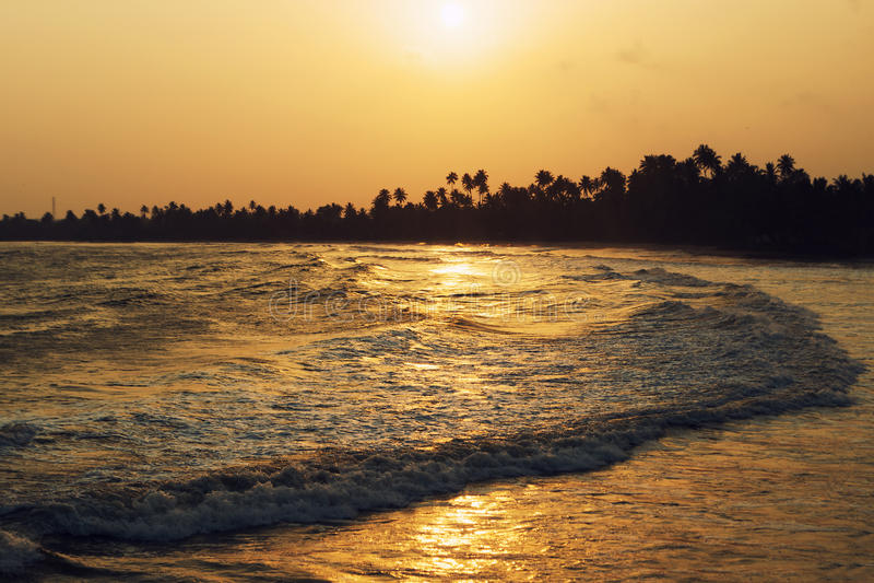 Onda lunga, tramonto dorato sulla riva dell'oceano nei tropici Siluetta delle palme sull'orizzonte fotografia stock