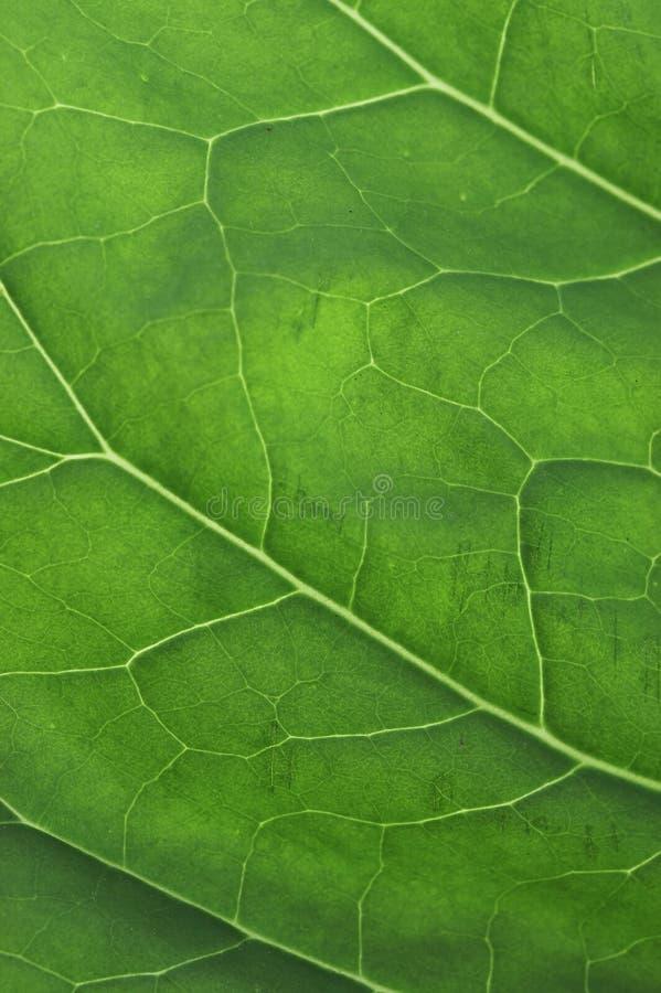 Onda verde fotografia stock