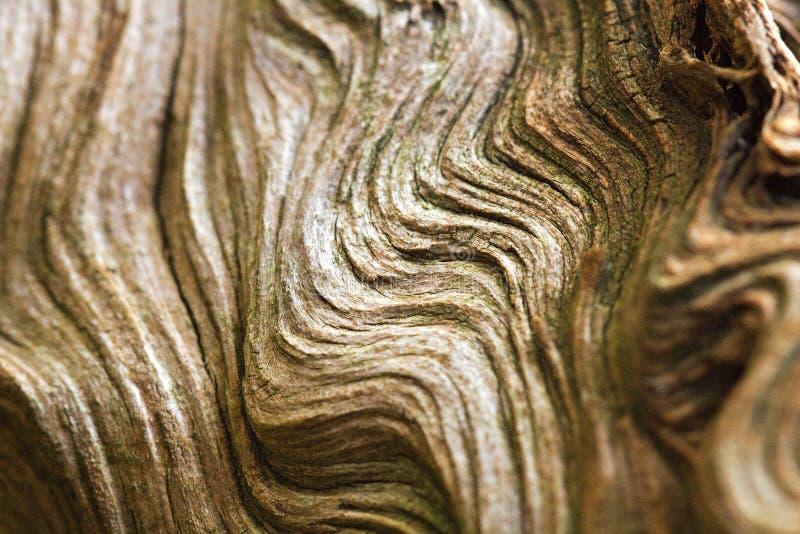 Ondas abstractas de madera imágenes de archivo libres de regalías