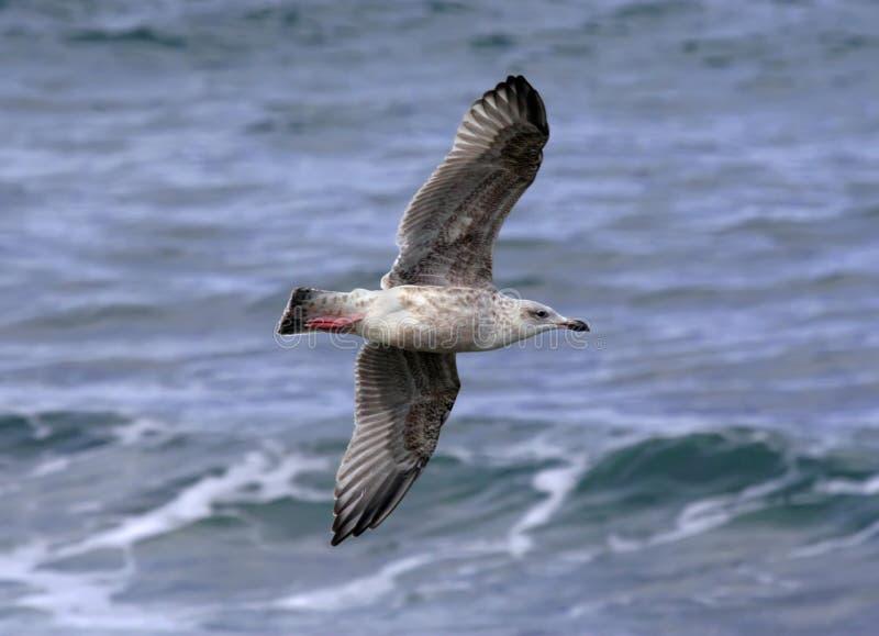 Ondas acima da gaivota imagens de stock