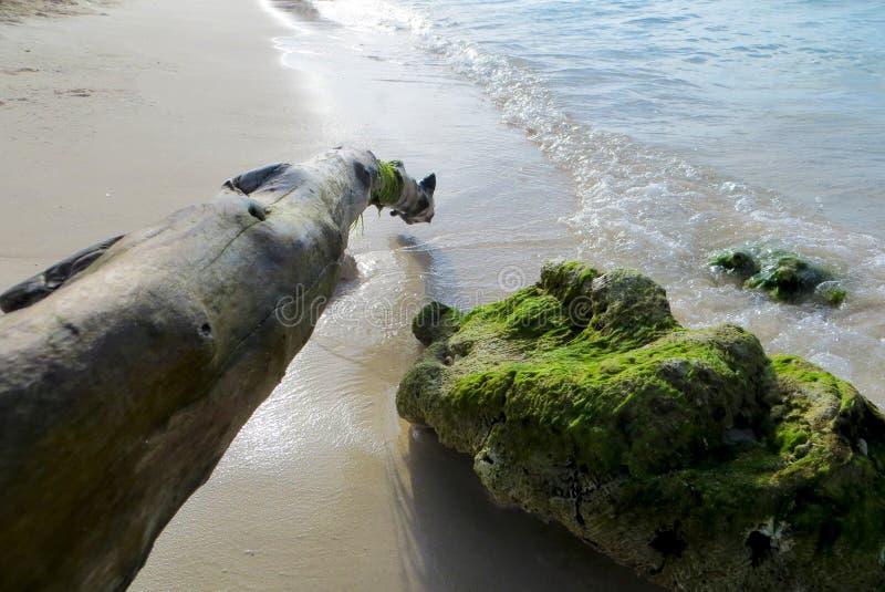 Ondas claros, praia venezuelana fotografia de stock royalty free