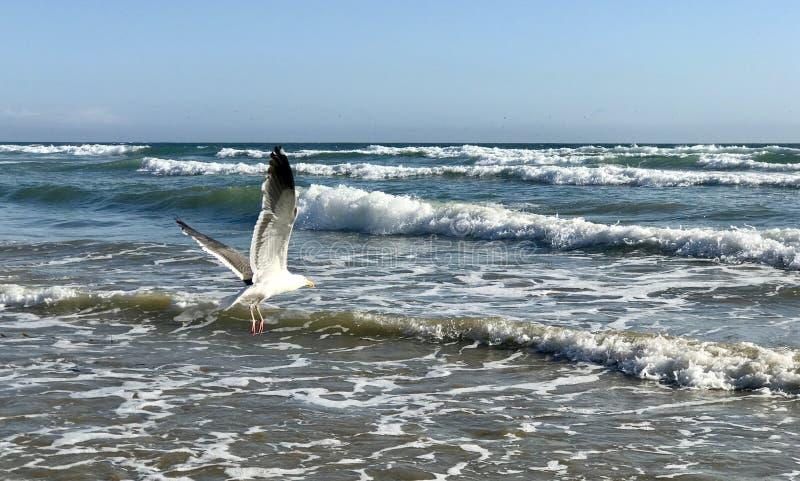 Ondas de oceano do pássaro imagem de stock royalty free