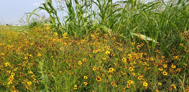 Ondas del grano - paisaje con el campo de oro y el cielo azul con las nubes blancas fotos de archivo