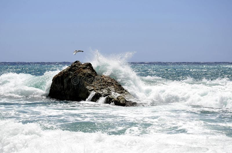 Ondas del mar, una roca y una gaviota fotografía de archivo