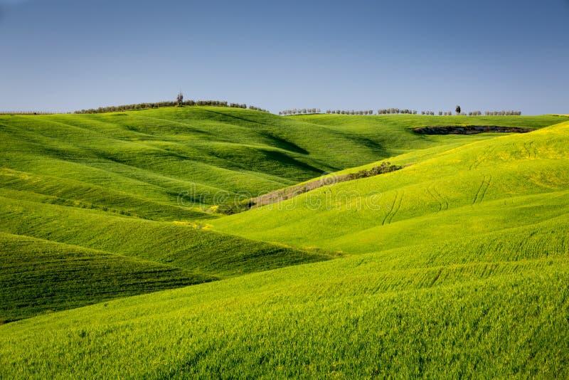 Ondas del paisaje en Toscana fotografía de archivo