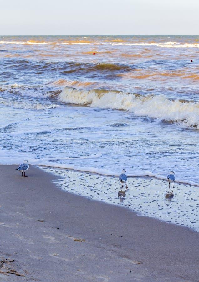 Ondas en el mar cerca de la orilla imagen de archivo libre de regalías