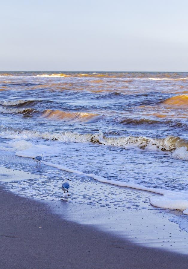 Ondas en el mar cerca de la orilla fotos de archivo