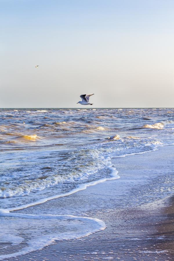 Ondas en el mar cerca de la orilla foto de archivo