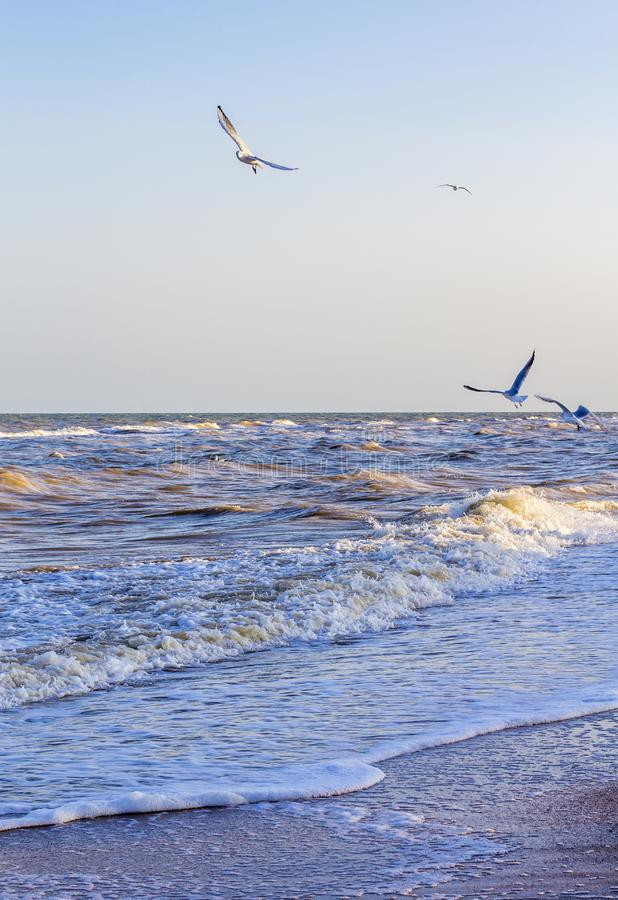 Ondas en el mar cerca de la orilla imagenes de archivo