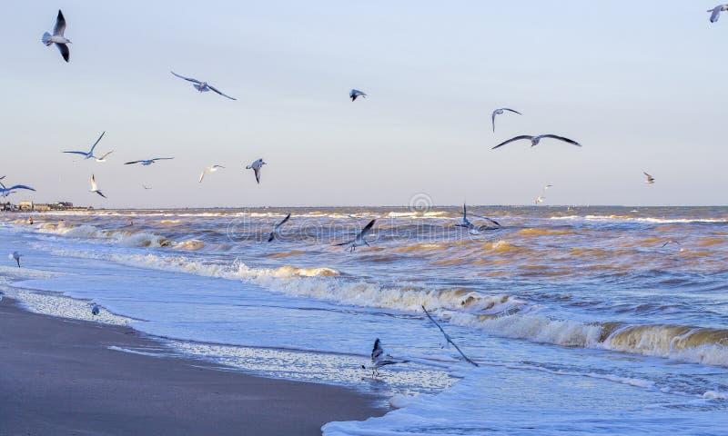 Ondas en el mar cerca de la orilla imagen de archivo