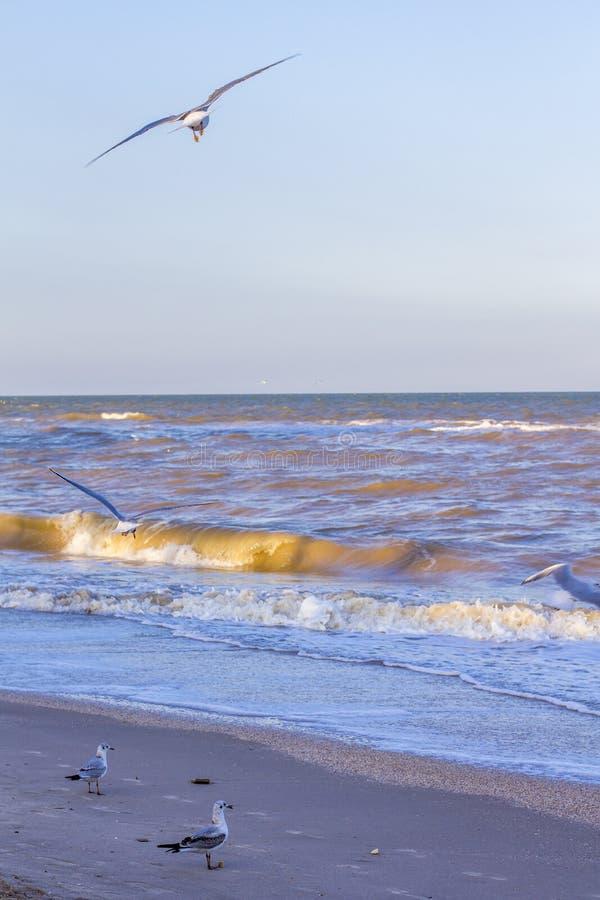 Ondas en el mar cerca de la orilla foto de archivo libre de regalías