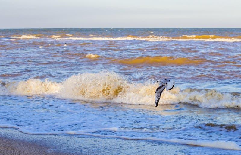Ondas en el mar cerca de la orilla imágenes de archivo libres de regalías