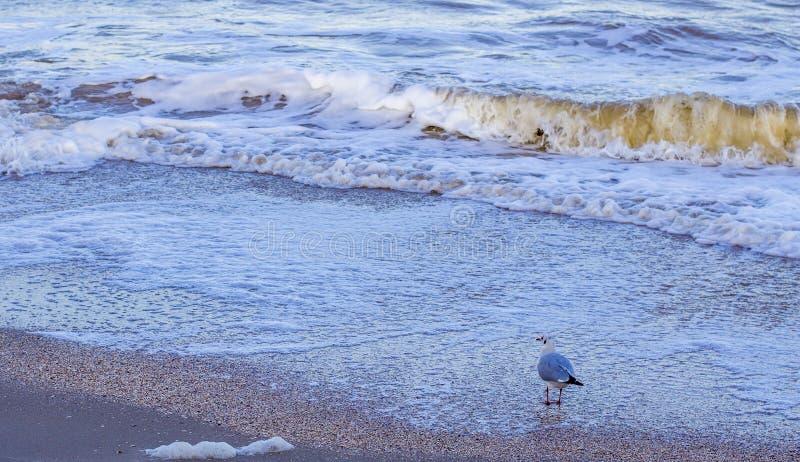 Ondas en el mar cerca de la orilla fotografía de archivo