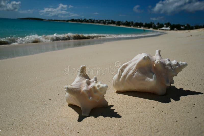 Ondas que se estrellan y cáscaras de la concha en Anguila fotografía de archivo