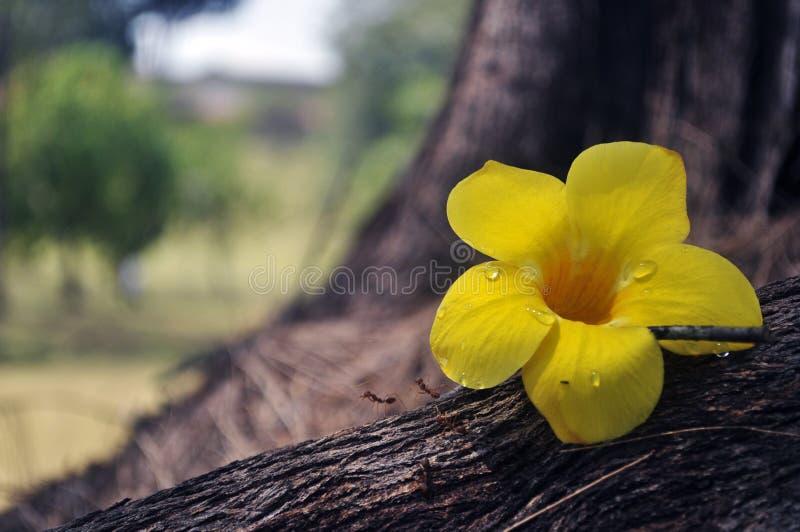 Onde as flores florescem, assim espera fotos de stock