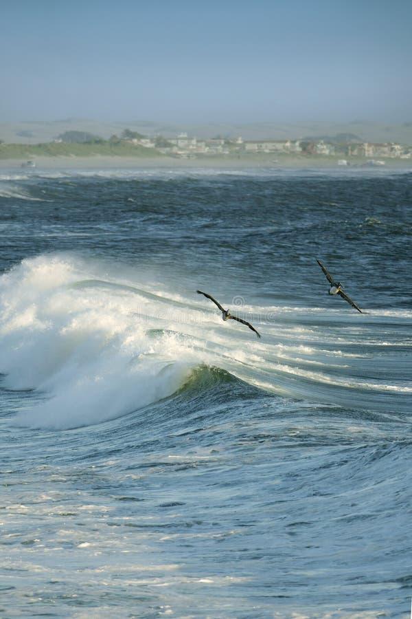 Onde di oceano, pellicani volanti immagine stock libera da diritti