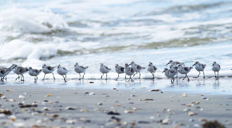 Onde e molti Shorebirds fotografia stock libera da diritti