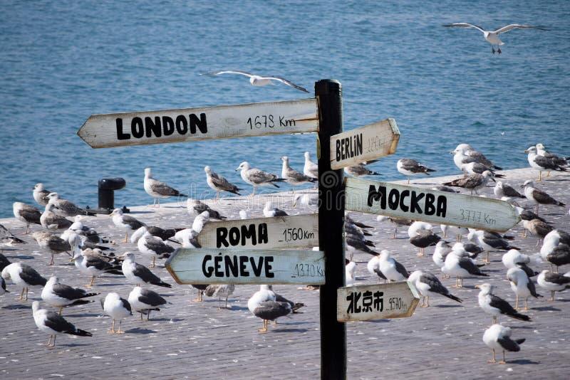 Onde estão as gaivotas que vão voar fotografia de stock