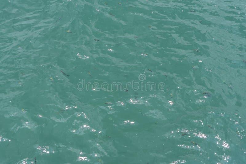 Onde leggere sulla superficie del mare verde smeraldo fotografia stock