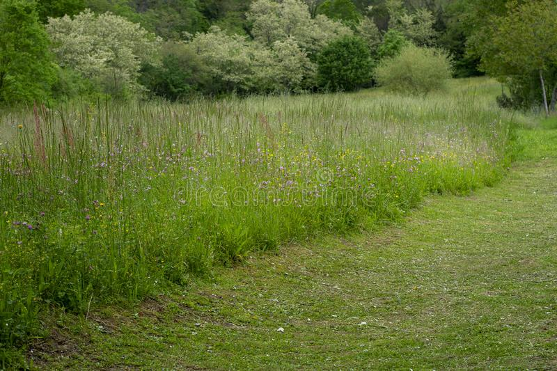 Onde o gramado encontra a natureza, beira com prado do wildflower Esta??o de mola imagens de stock