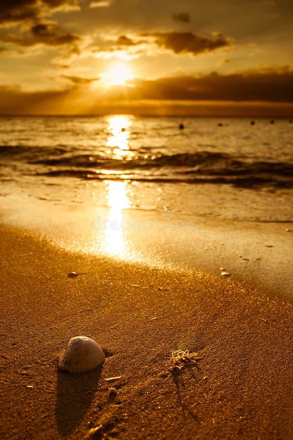 Ondeggia la conchiglia d'avvicinamento sulla spiaggia durante il tramonto fotografie stock libere da diritti