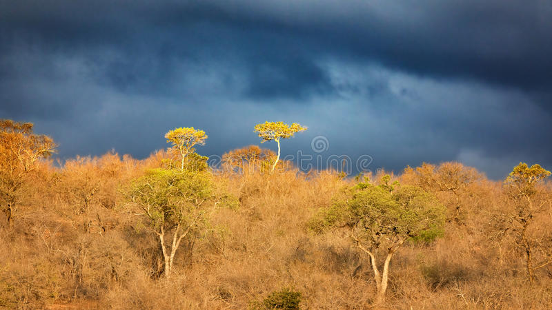 Onder Afrikaanse hemelen stock foto's