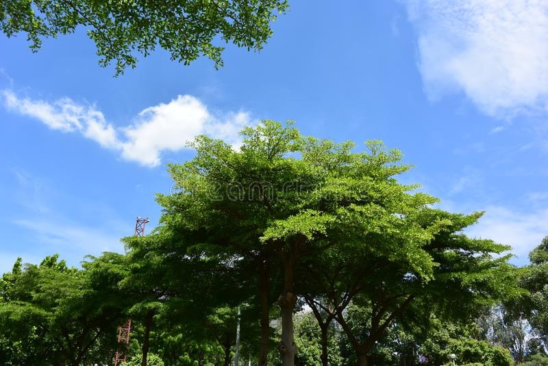 Onder blauw is de hemel kleuren groene bomen stock foto