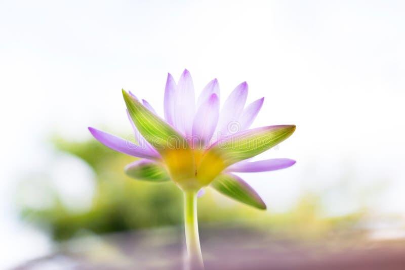 Onder bloem of de waterlelie van menings de mooie purpere Lotus bij het onduidelijke beeld B royalty-vrije stock foto's