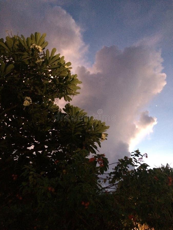 Onder de boom aan de hemel stock foto's