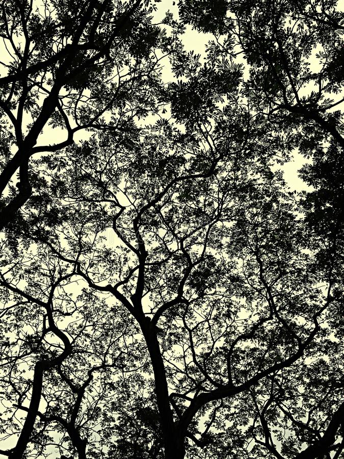Onder de boomschaduw royalty-vrije stock afbeeldingen