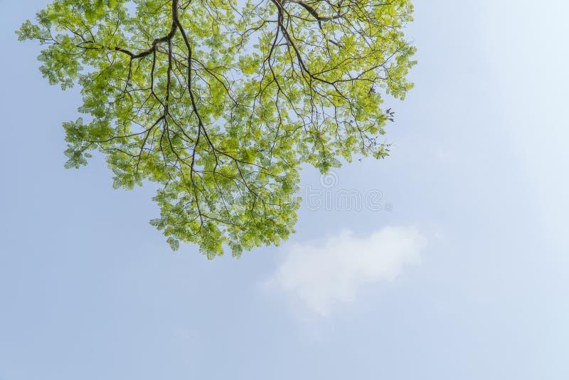 Onder de grote boom en met tak overdrijf royalty-vrije stock afbeelding