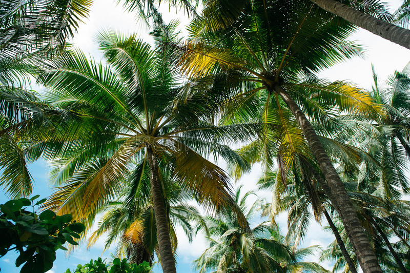 Onder de palmen stock foto's