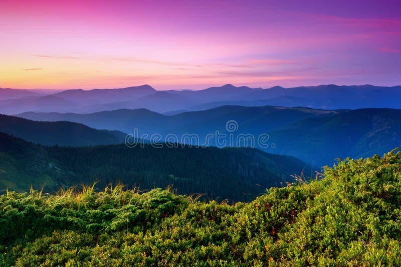 Onder de purpere die hemel bepaal bergheuvels met kruipende pijnbomen worden behandeld stock afbeelding