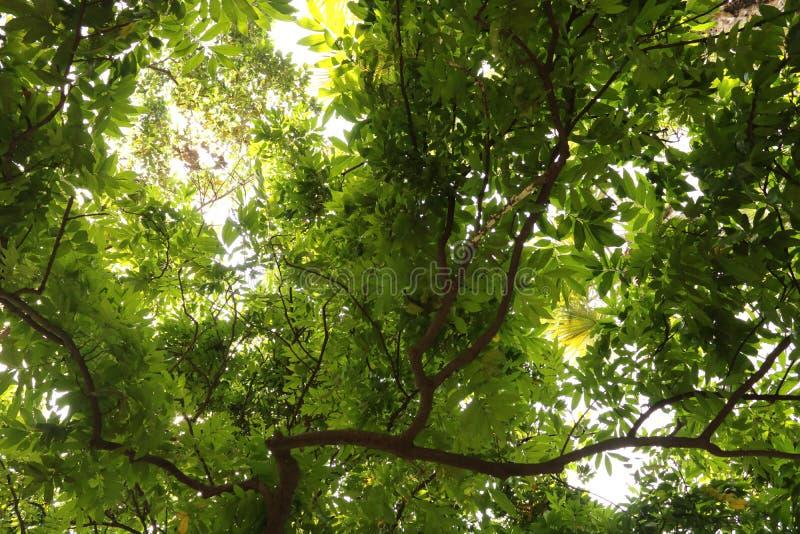 Onder de schaduw van groene bladeren in het bos stock afbeeldingen