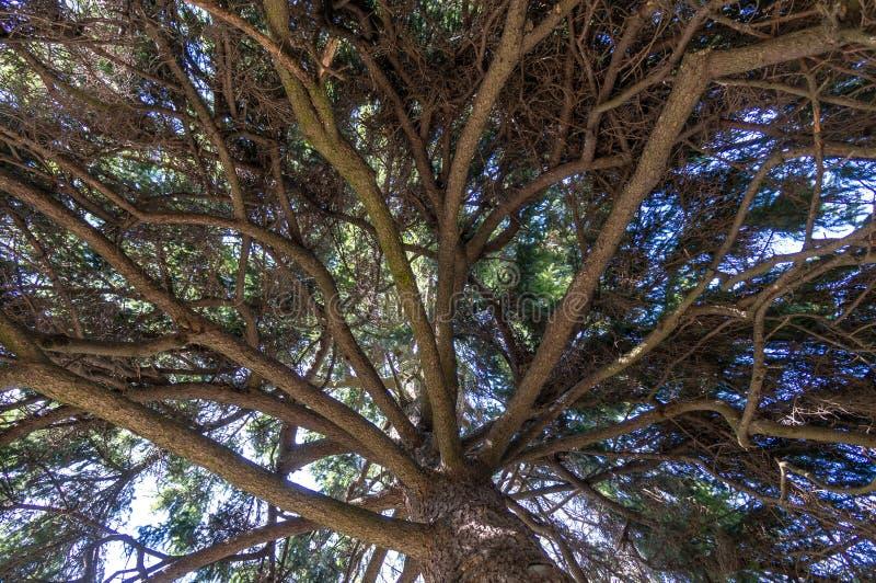 Onder de schaduw van lange bomen stock fotografie