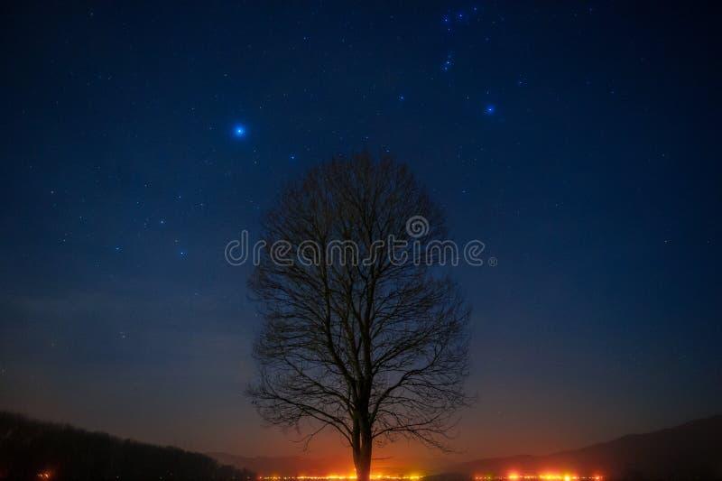 Onder de sterren stock fotografie