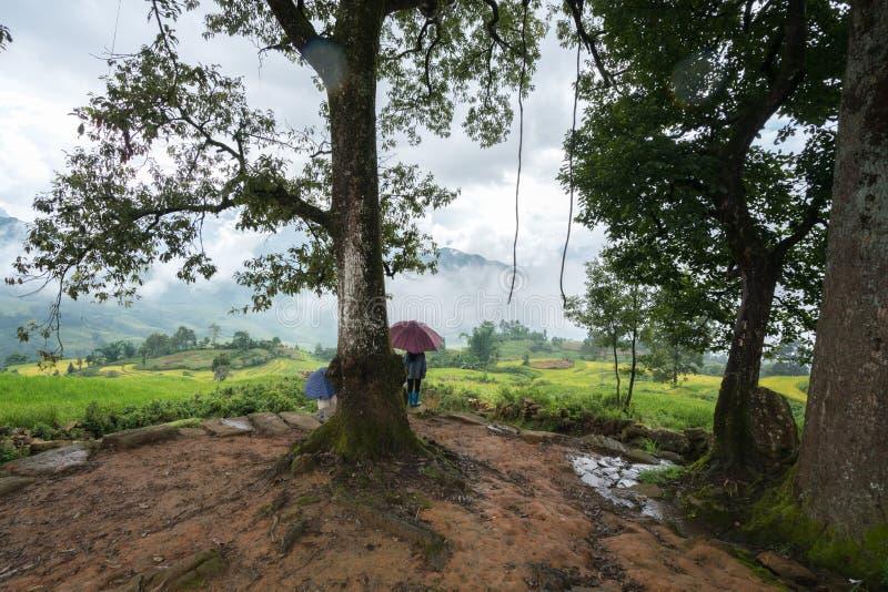 Onder grote boom met nevelig terraspadieveld in Lao Cai, Vietnam stock foto's