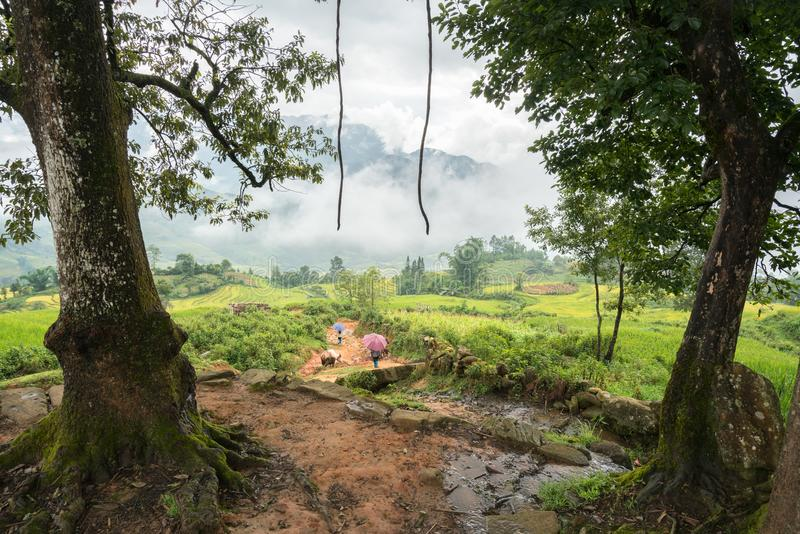 Onder grote boom met nevelig terraspadieveld in Lao Cai, Vietnam royalty-vrije stock fotografie