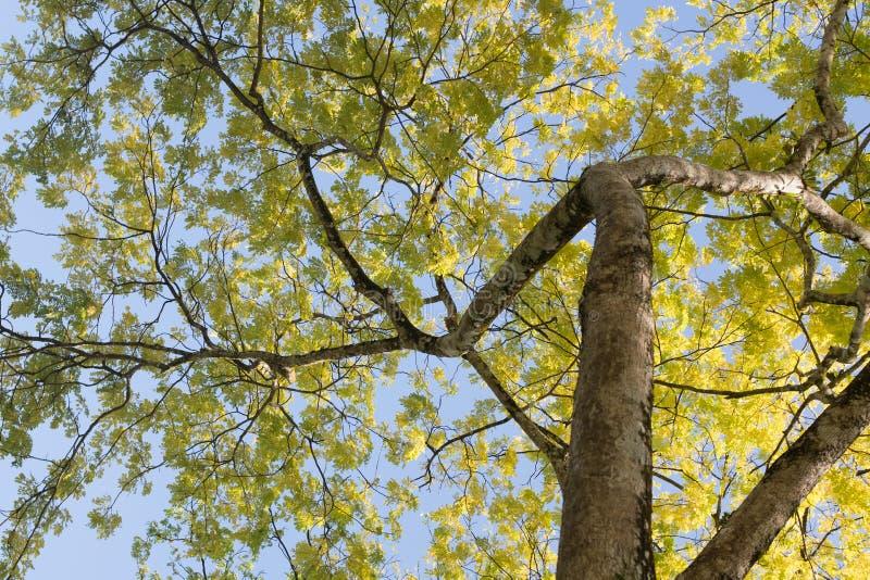 Onder grote boomschaduw stock foto's