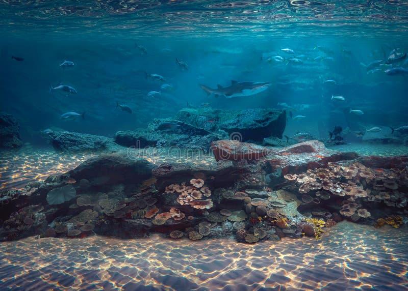 Onder het avontuur van het watervrij duiken in Caraïbische overzees stock foto's