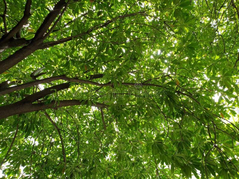 onder het grote concept van de boomgroei stock foto's