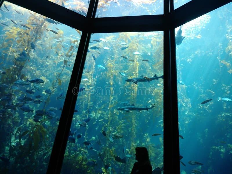 Onder het waterleven stock foto